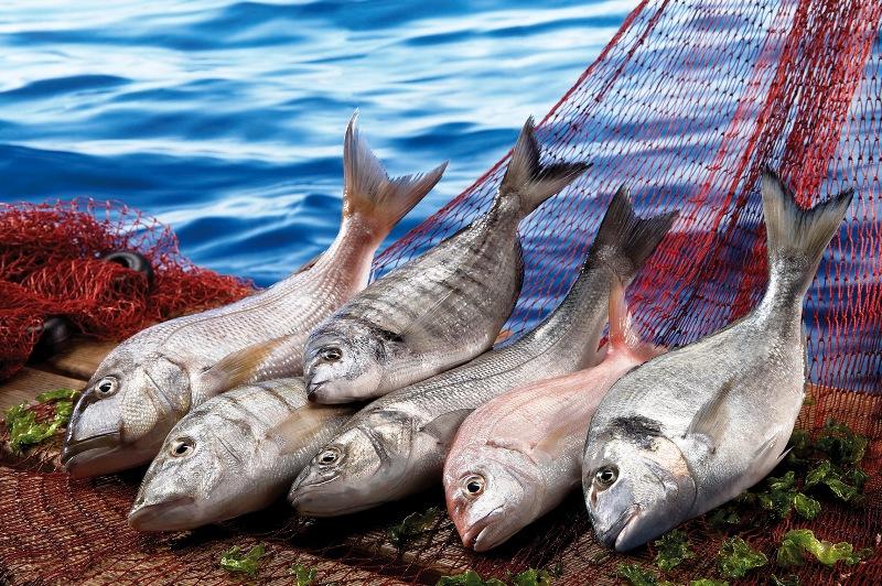 Denizlerde av yasağı başlıyor…