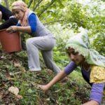 Tüm Köy Sen Ordu Şubesi: Üretici emeğinin hakkını istiyor