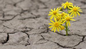Resilience'yi artıran kaynaklara yönelik geliştirdikleri 5 parçalı model