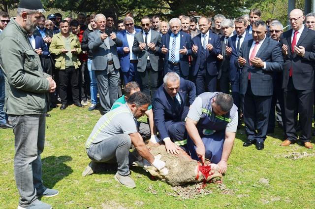 Babaoğlu makam devri öncesi Selman dede mesire alanında kurban kesti .