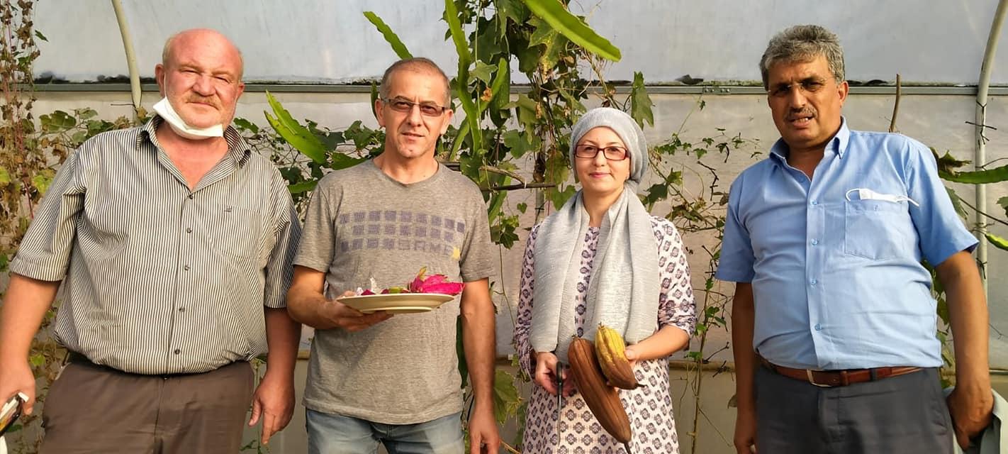 Ejder meyvesi Sakarya'da Yetişiyor  Yetkililer Duyarsız