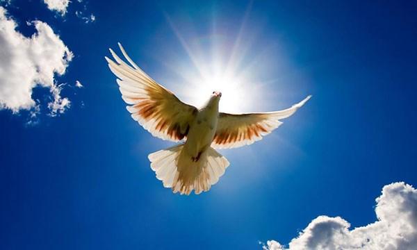 Barış istemek cesaret işidir.