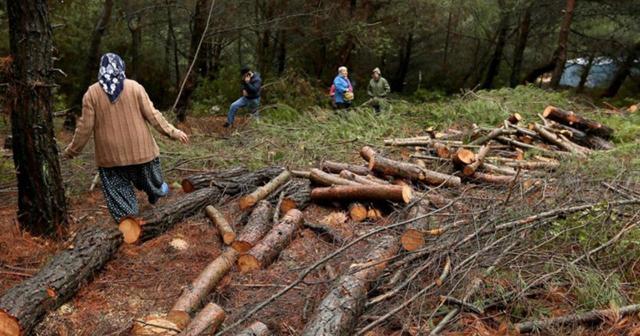 Urla Ovacık'ta RES için ağaç kesimi yeniden başladı!