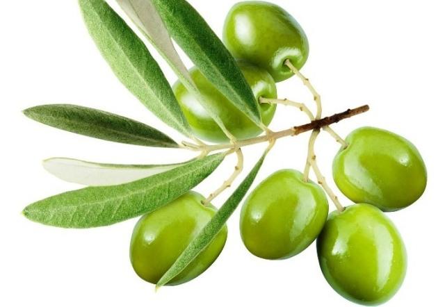 olive_zeytin