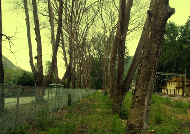 Geyve Boğazındaki Ağaç katliamı  için Gönüllüler Ayaklandı