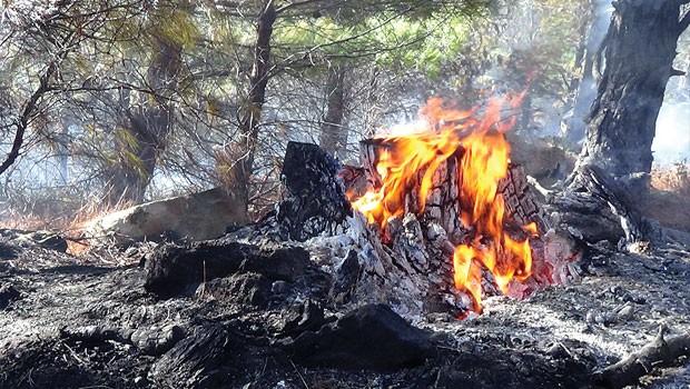 Kazdağları Milli Park'ı  yangınlara karşı korunması yok