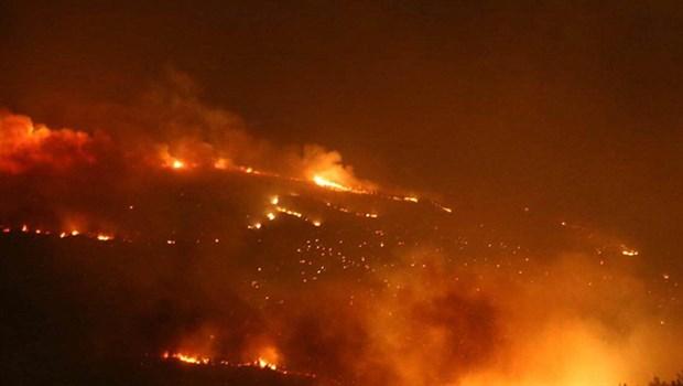 Seferihisar'da 50 hektar orman kül oldu!..