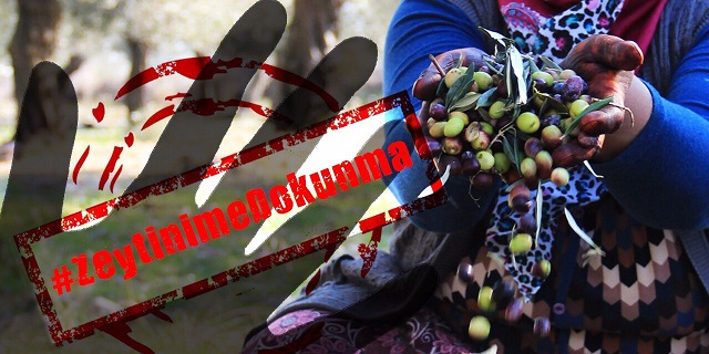 117 milyon zeytin ağacını kurtar!