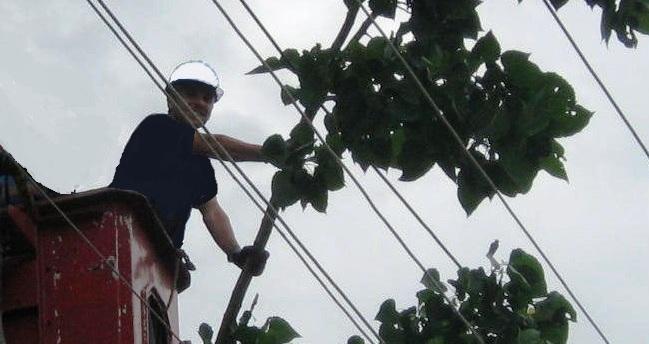 Enerji Hattında Ağaç Bakımı Yasal Zorunluluk