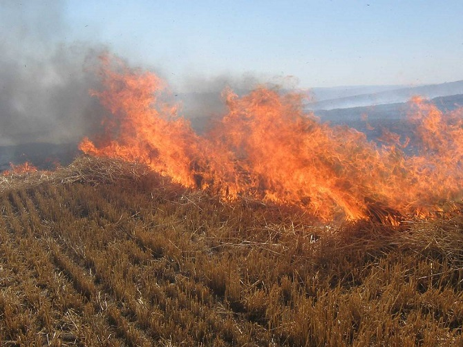 Anız ateşi toprağı öldürüyor