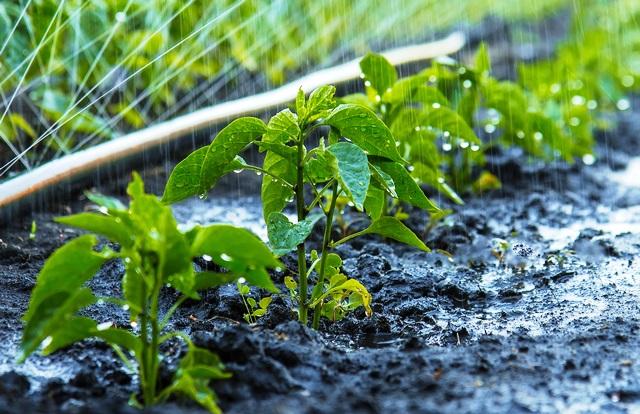 Tarımsal kalkınmanın anahtarı planlı ve sürdürülebilir bir üretim politikası